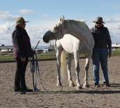 Anna and andrea helping horse.jpg
