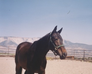 Aero hanging out in the arena