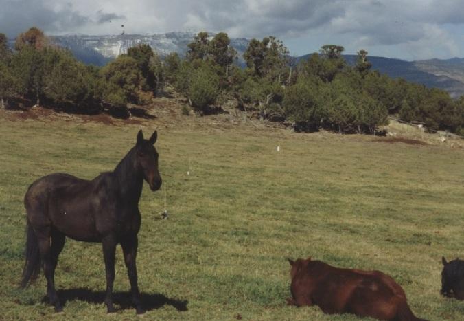 Aero watching over the herd in rifle