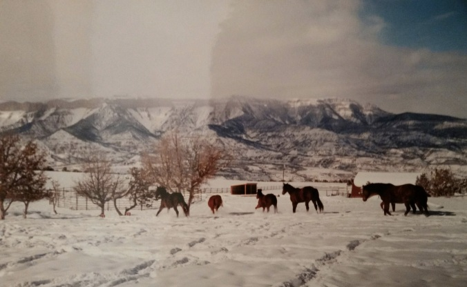 Herd playing in snow - rifle 2002