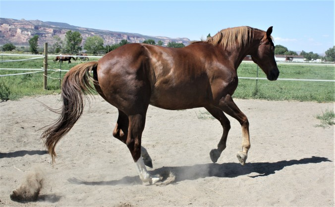 Huey gallop