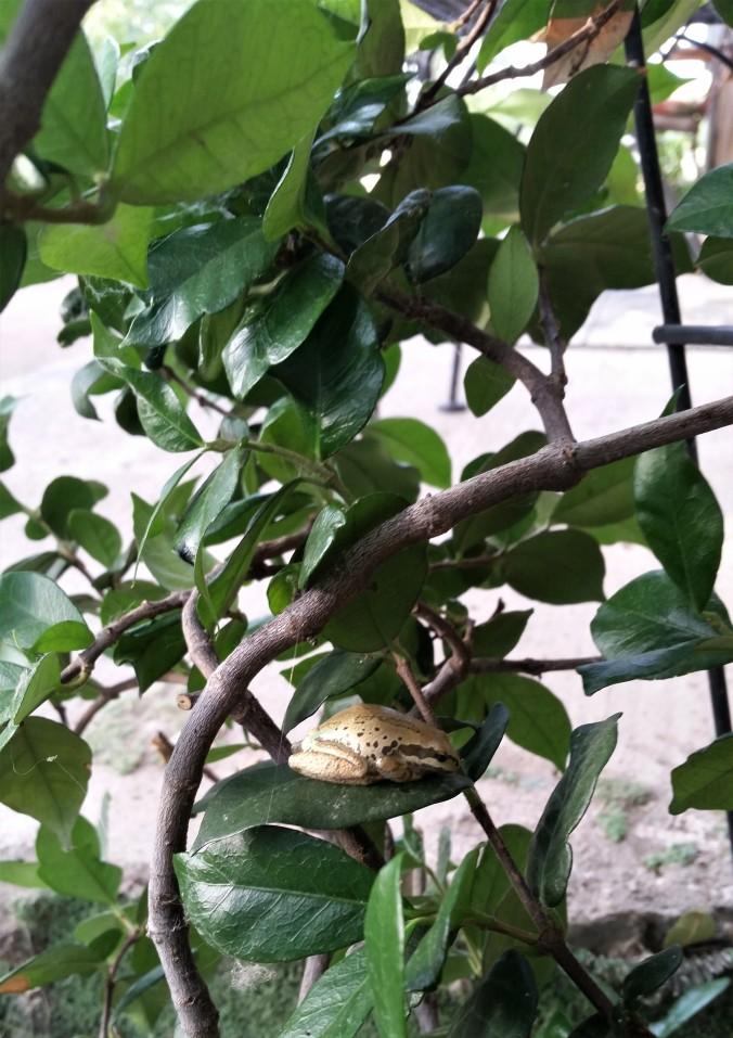 Little frog one blog july 2018.jpg