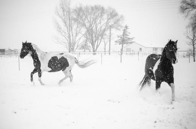 snow day-0965