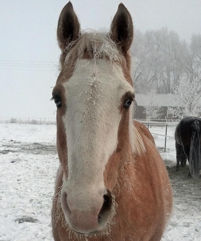 Frosty Jack.jpg